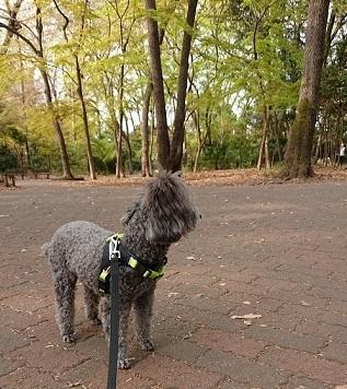 石神井公園-1.JPG
