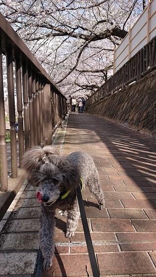石神井川0331.JPG