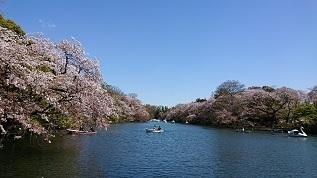井の頭公園-1.JPG