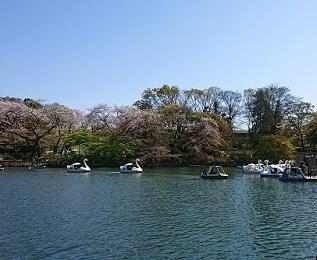 井の頭公園-2.JPG