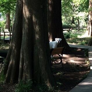 metasequoia-3-2.JPG