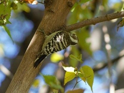 woodpecker -2.jpg
